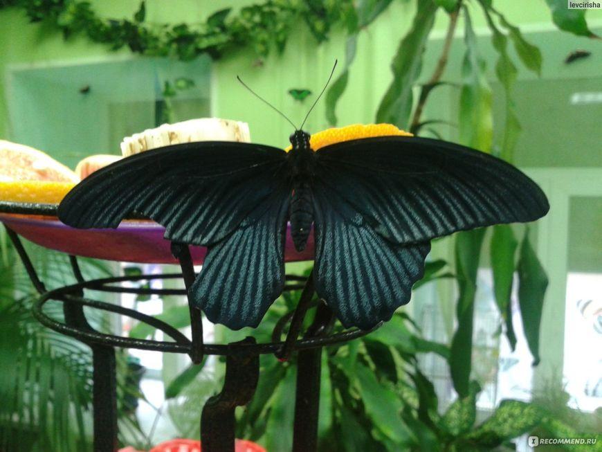 Сад живых тропических бабочек